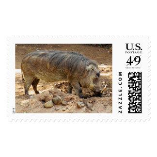 Warthog Postage