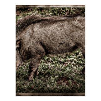 Warthog. Postales