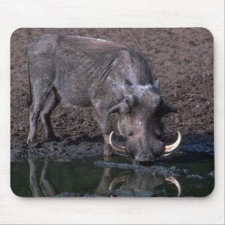 Warthog - verraco grande tapetes de raton