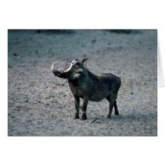 Warthog - verraco grande tarjeta de felicitación