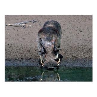 Warthog - verraco grande tarjeta postal