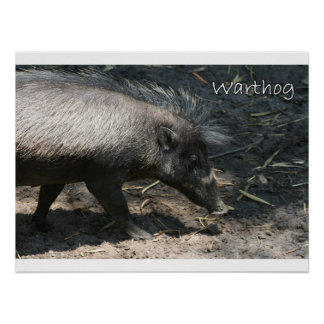 Warthog walking by palmetto posters