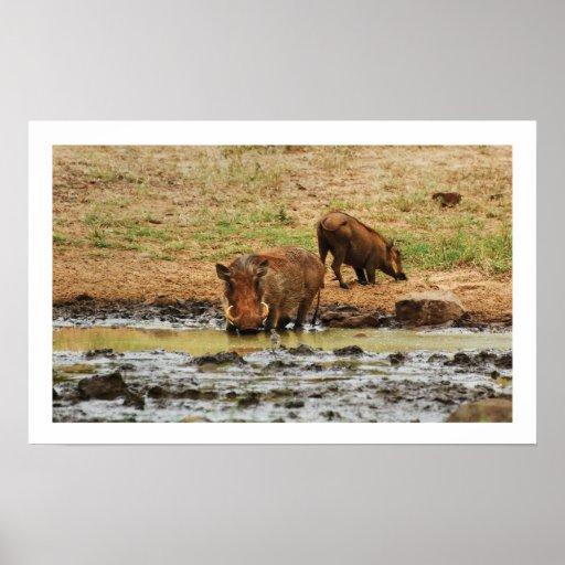 Warthog wallowing poster