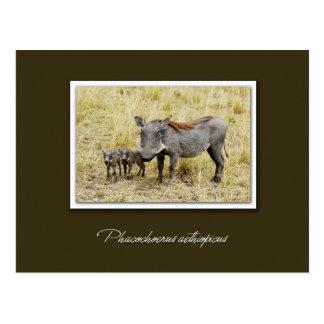 Warthog with piglets safari postcards