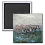 Warthogs 2 Inch Square Magnet