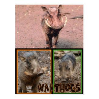 WARTHOGS - ANIMALES SALVAJES TARJETAS POSTALES
