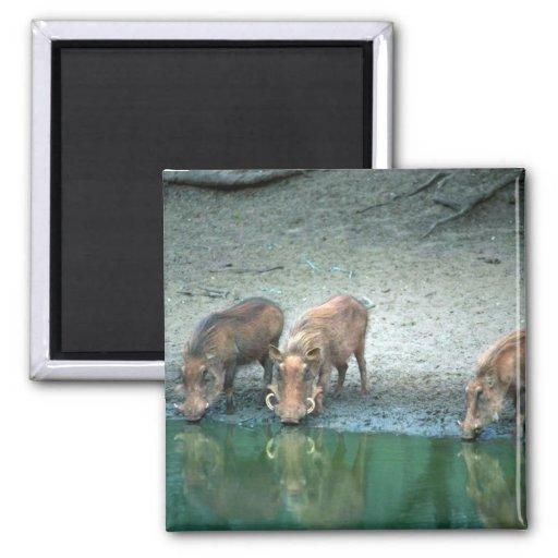 Warthogs Imán Para Frigorifico