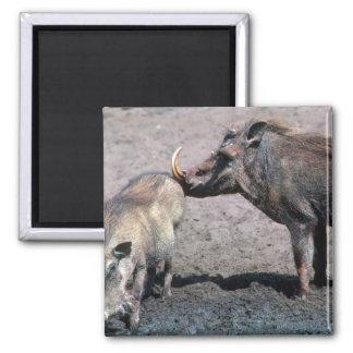 Warthogs - verraco (derecho) y cerda (izquierda) imán de frigorífico