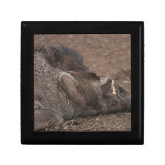 Warty Hog Gift Box