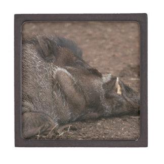 Warty Hog Premium Keepsake Box