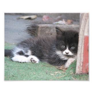 Wary Kitten Photo Art