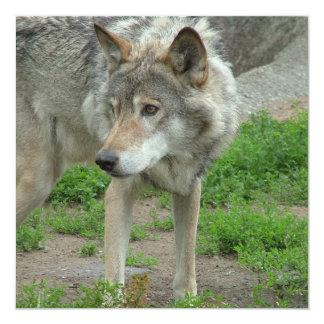 Wary Wolf Invitations