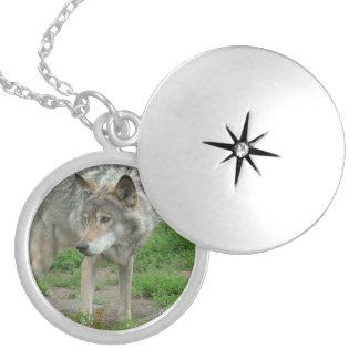 Wary Wolf Locket