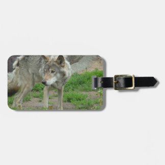 Wary Wolf Luggage Tag