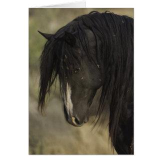 Washakie en la tarjeta de felicitación del caballo