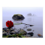 Washed Ashore Red Rose Postcard