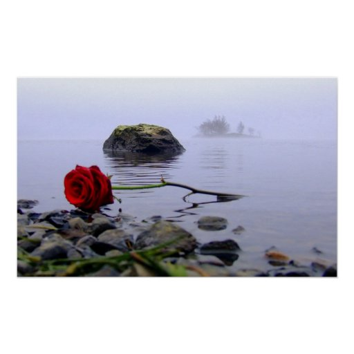 Washed Ashore Red Rose Poster