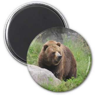 Washington Brown Bear Refrigerator Magnet