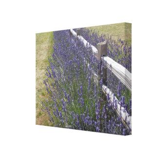 Washington  Coast Lavender Canvas Print