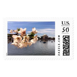 Washington D.C. Cherry Blossoms Postage