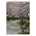washington dc cherry blossom card