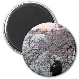 Washington DC Cherry Blossom Magnet