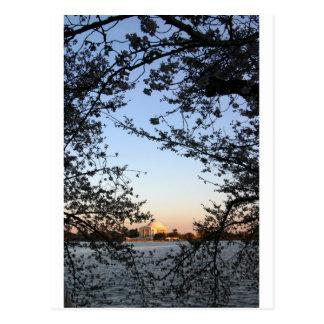 Washington DC Cherry Blossom Postcard