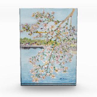 Washington DC Cherry Blossoms Watercolor Painting Acrylic Award