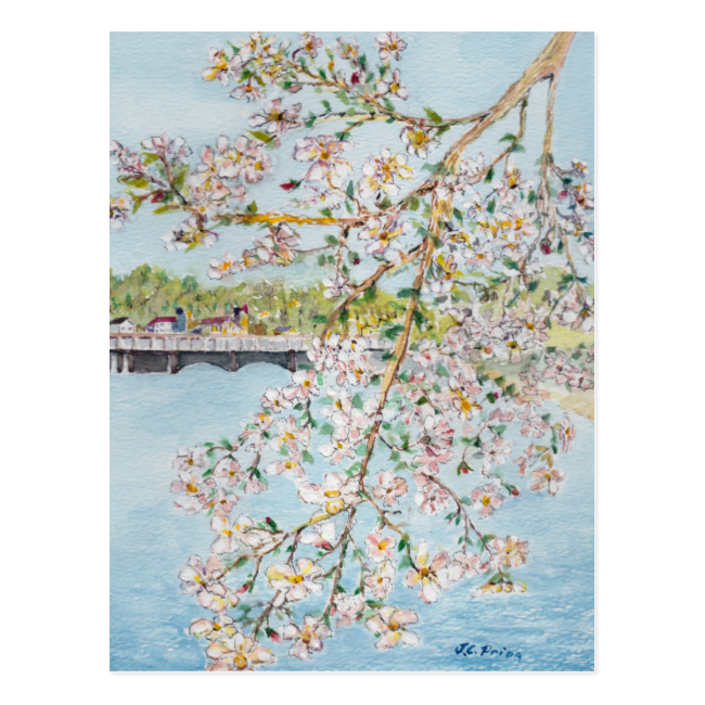 Washington DC Cherry Blossoms Watercolor Painting Postcard