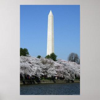 Washington DC Cherry Blossums Poster