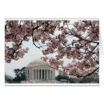 Washington DC de la flor de cerezo Felicitacion