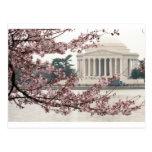 Washington DC de la flor de cerezo Postal