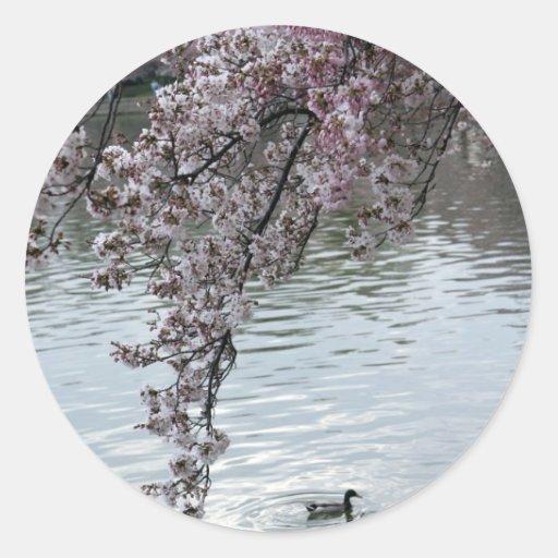 Washington DC de las flores de cerezo Pegatina Redonda