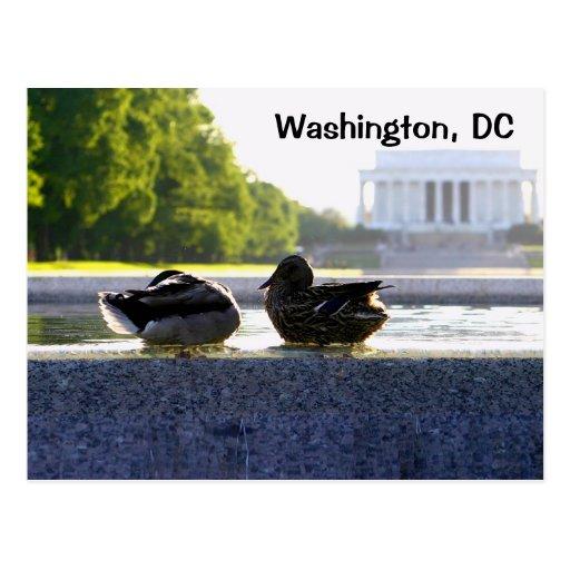 Washington, DC:  Patos en el monumento de WWII Tarjeta Postal