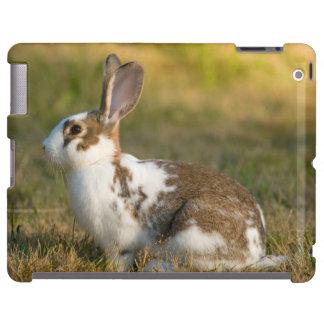 Washington, Discovery Park. Adult Rabbit