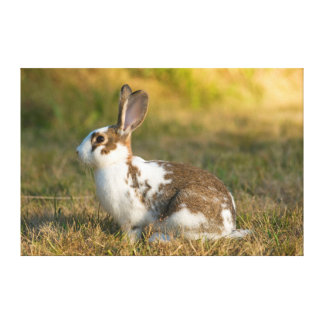 Washington, Discovery Park. Adult Rabbit Canvas Prints