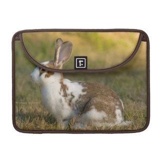 Washington, Discovery Park. Adult Rabbit MacBook Pro Sleeve