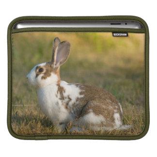 Washington, Discovery Park. Adult Rabbit Sleeve For iPads