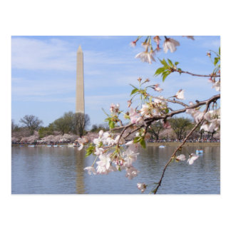 Washington Monument Beautiful Gifts Postcard