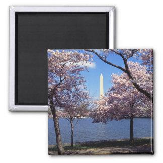 Washington Monument Through Cherry Blossoms 2 Inch Square Magnet