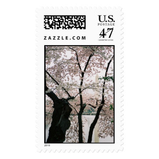 Washington Monument with Cherry Blossoms Postage