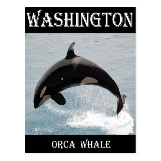 Washington Orca Whale Postcard
