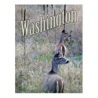 Washington Postcard, Two White Tail Deer Postcard