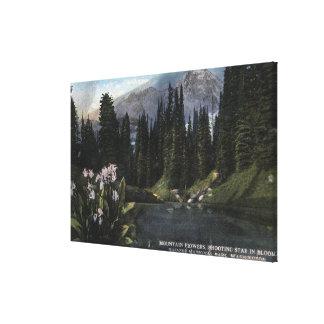 Washington - Rainier National Park, Shooting Sta Gallery Wrapped Canvas