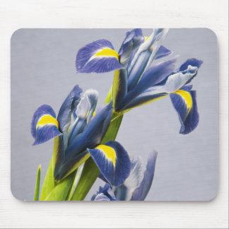 Washington, Redmond, Purple Irises Mouse Pad