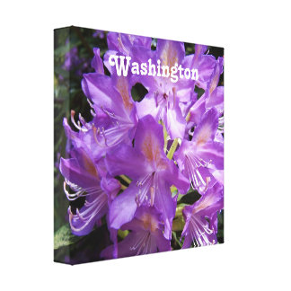 Washington Rhododendron Stretched Canvas Print