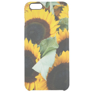 Washington, Seattle, Sunflower for sale pike Clear iPhone 6 Plus Case