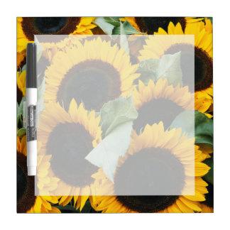 Washington, Seattle, Sunflower for sale pike Dry Erase Boards