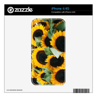 Washington, Seattle, Sunflower for sale pike iPhone 4 Decals