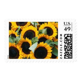 Washington, Seattle, Sunflower for sale pike Postage